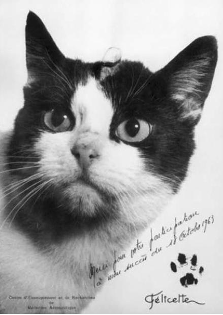 Felicette, premier chat dans l'espace (CERMA 1963)